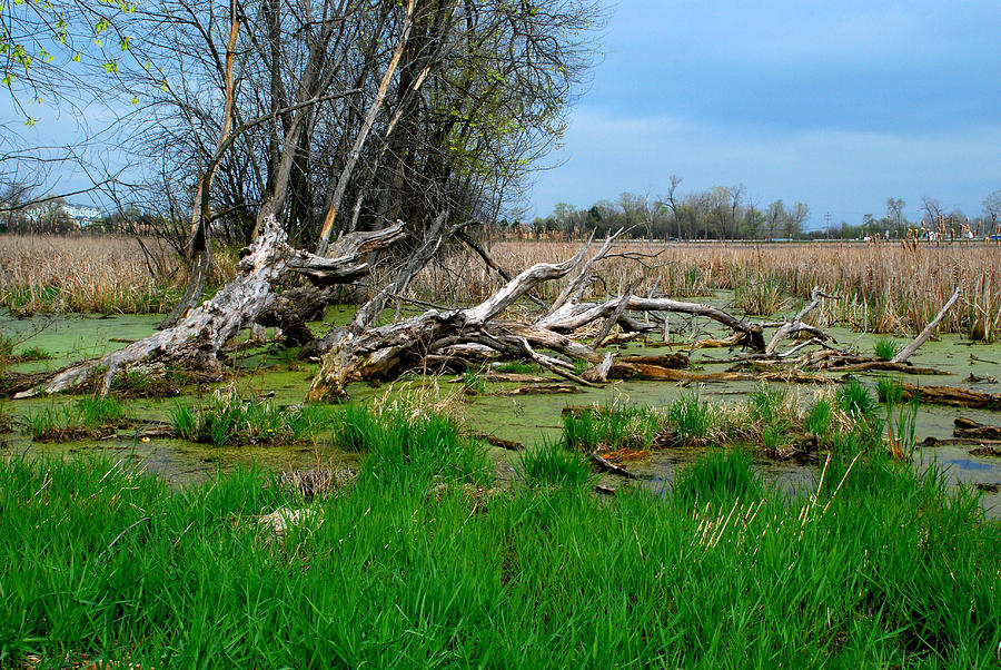 Swamp Photograph by Lev PALIEV