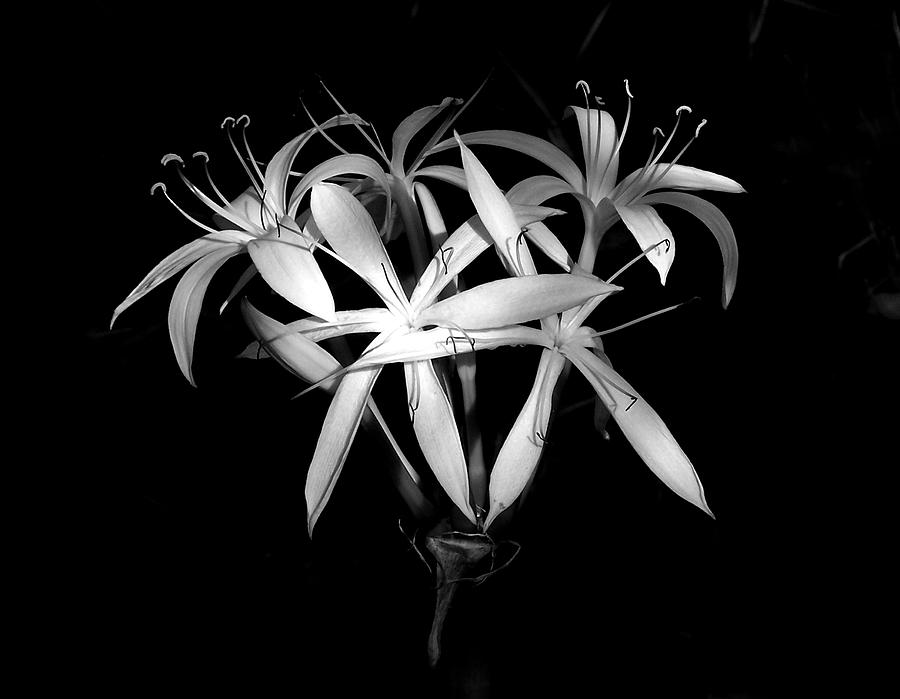 Nature Photograph - Swamp Lilies by Peg Urban