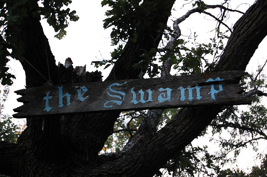 Swamp Oak Photograph by The Stone Age