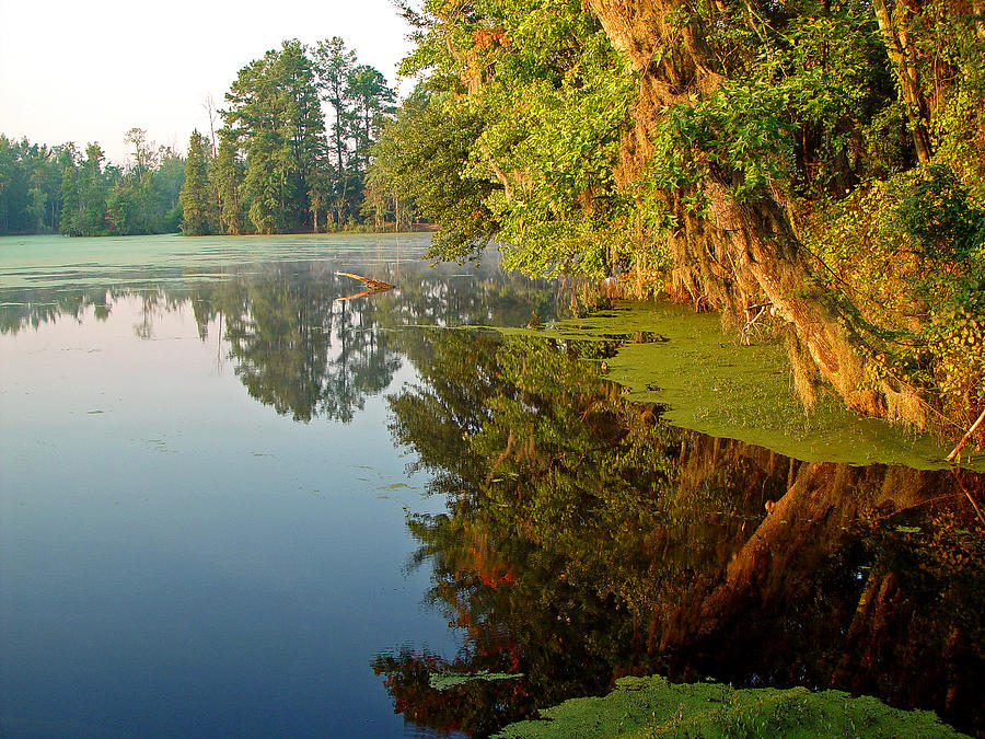 Landscape Photograph - Swamp Pond by Michael Whitaker