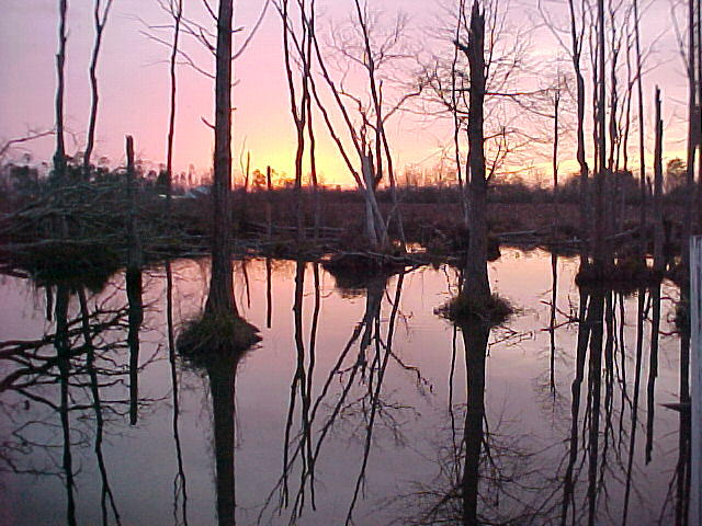 Sunset Photograph - Swamp Sunset by Dennis Pops Tangeman