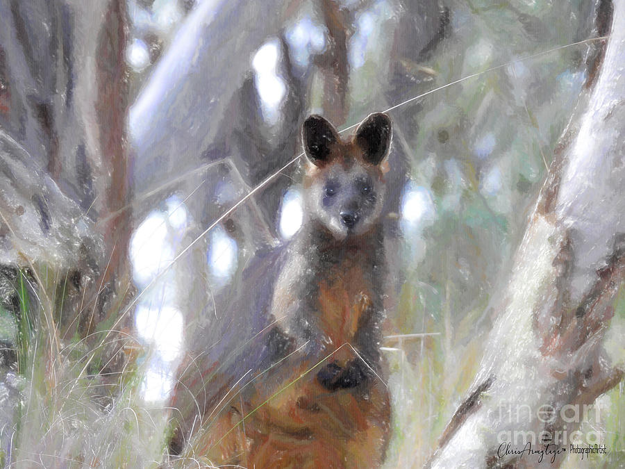 Eastern Australia Painting - Swamp Wallaby by Chris Armytage