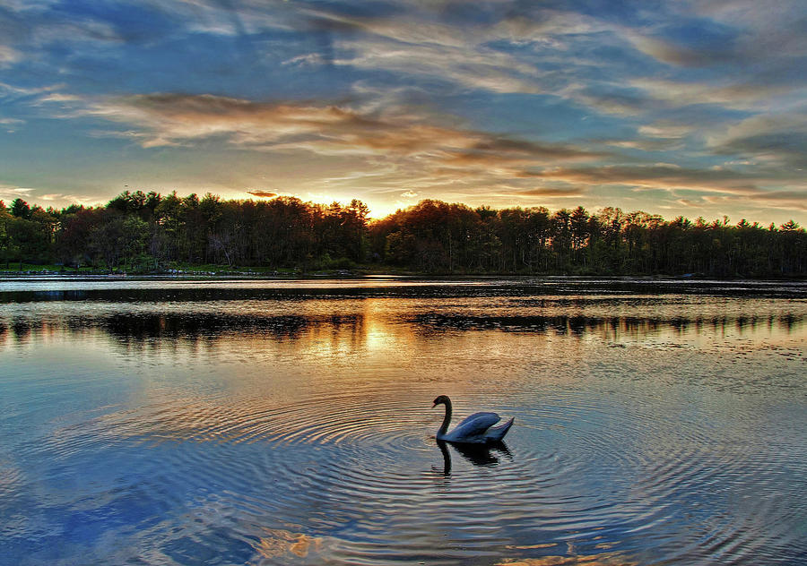 Swan at Sunset by Wayne Marshall Chase