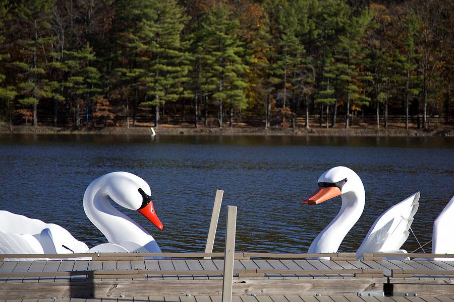 Swan Photograph - Swan Boats by Joanna Madloch