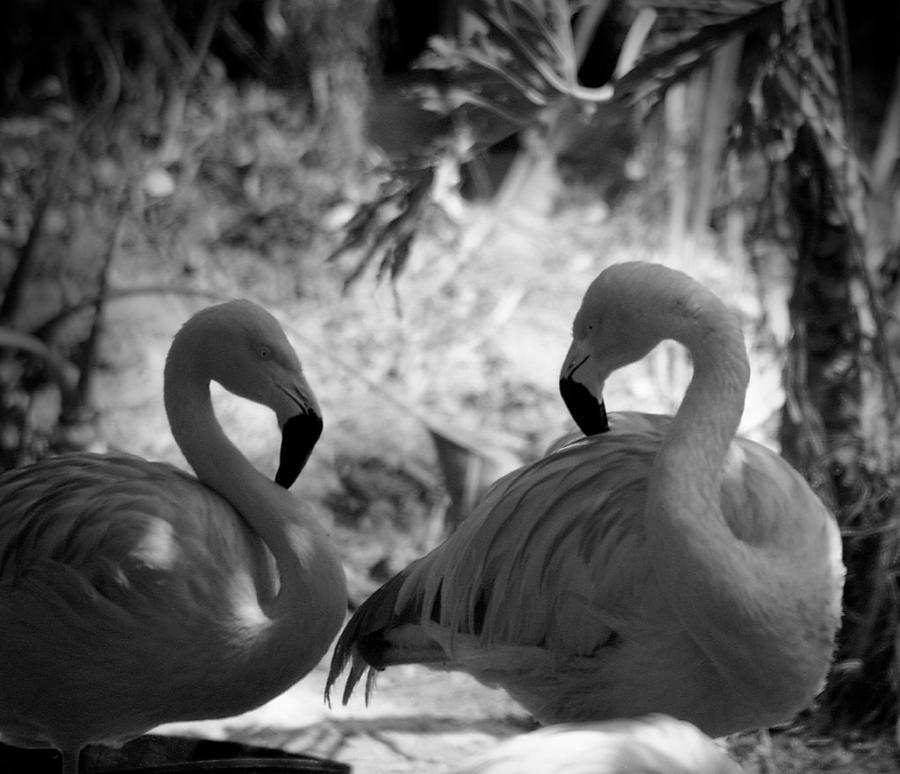 Swan Dance by Maria Reverberi
