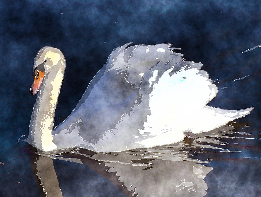 Swan Photograph - Swan by David G Paul