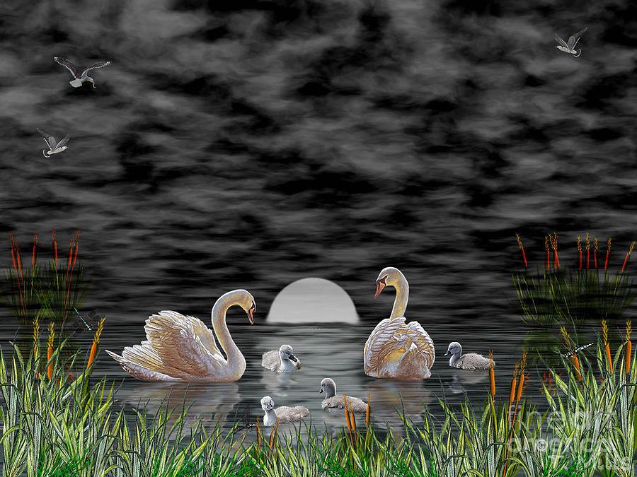 Swan Digital Art - Swan Family by Terri Mills