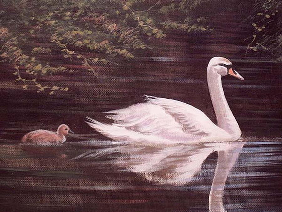 Swan Painting - Swan Lake by Cathal O malley