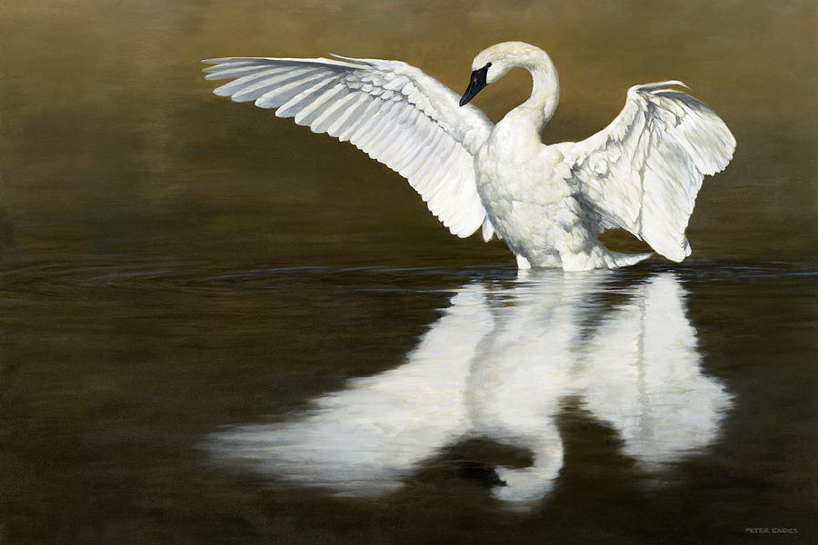 Swan Lake by Peter Eades