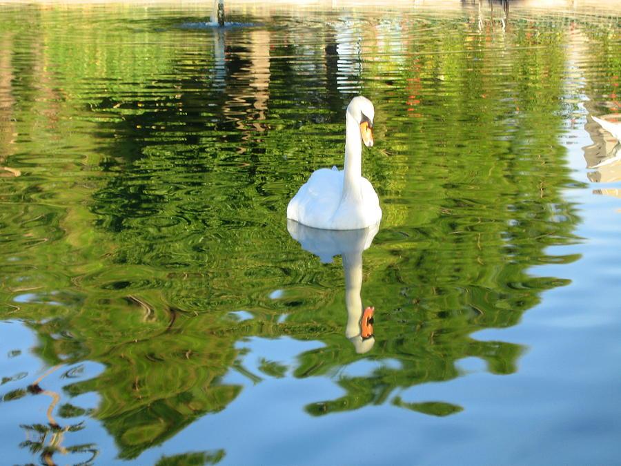 Swan Lake Digital Art - Swan Lake by Thomas Hayden
