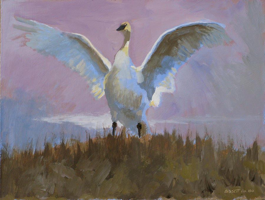 Swan Painting by Robert Bissett