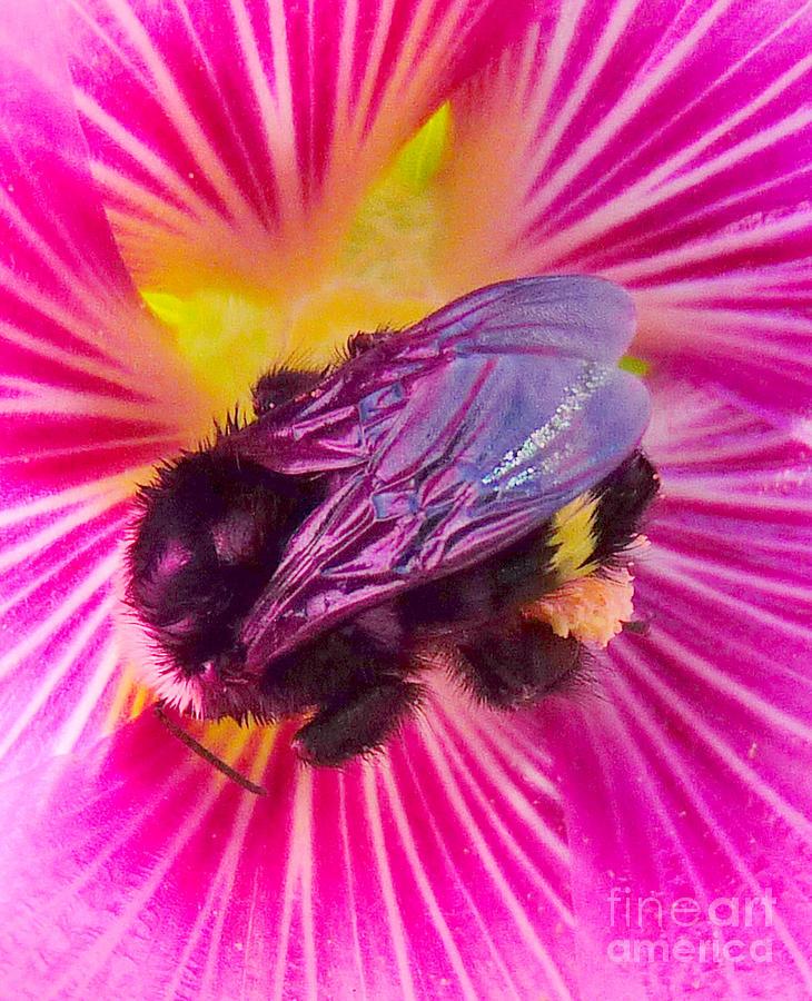 Reflections Photograph - Sweet Bee by JoAnn SkyWatcher