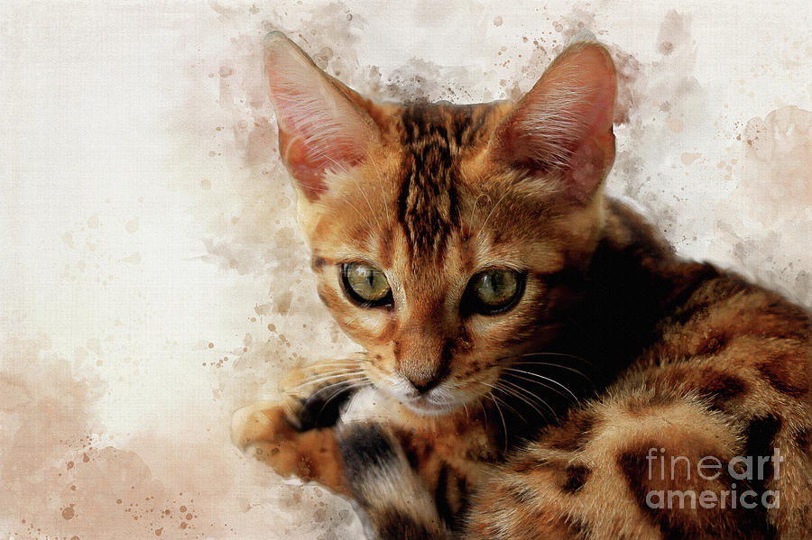 Sweet Bengal Kitten by Teresa Zieba