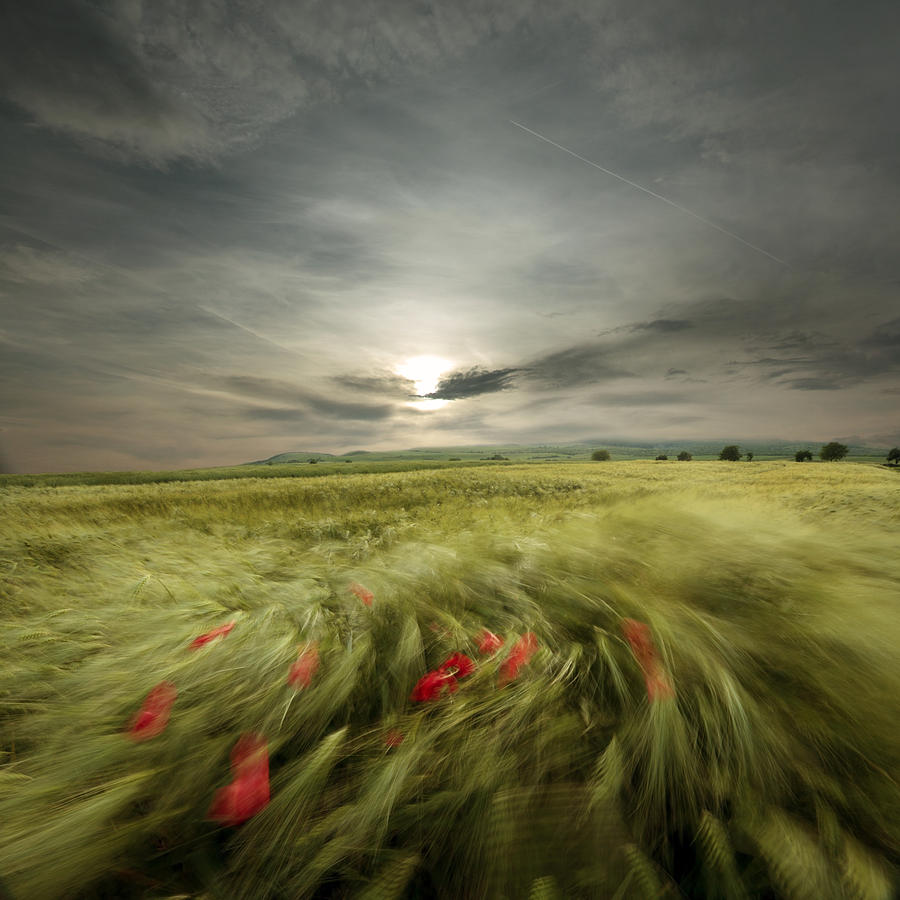 Landscape Photograph - Sweet breath of summer by Floriana Barbu