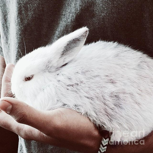 Bunny Photograph - Sweet Bunny Love by Sharon Mau