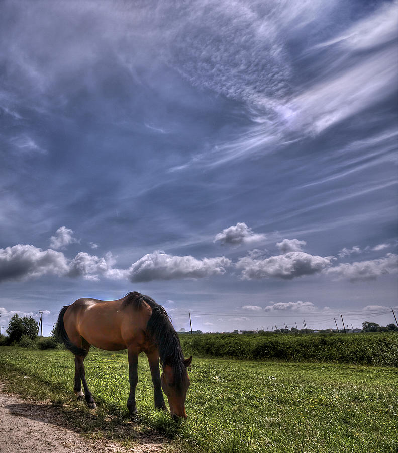 Cloud Photograph - Sweet Country Scents by Evelina Kremsdorf