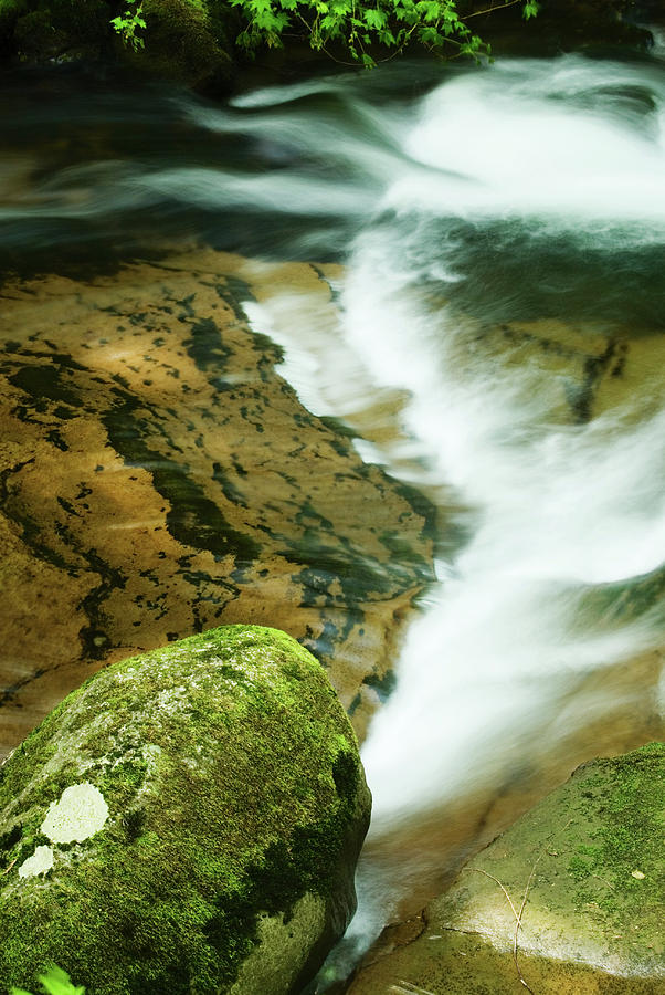 Oregon Photograph - Sweet Creek by Renee Hong