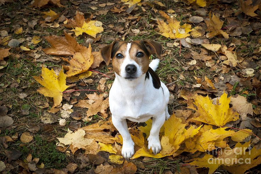 Autumn Photograph - Autumn feeling by Kira Yan