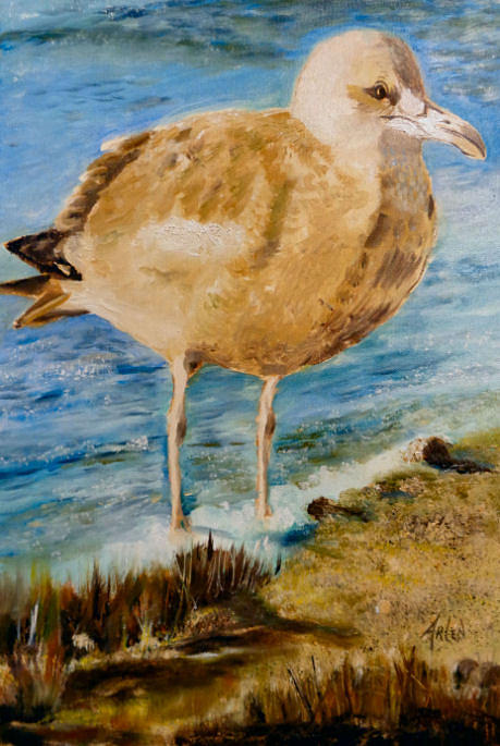 Sweet Gull Chick by Arlen Avernian - Thorensen