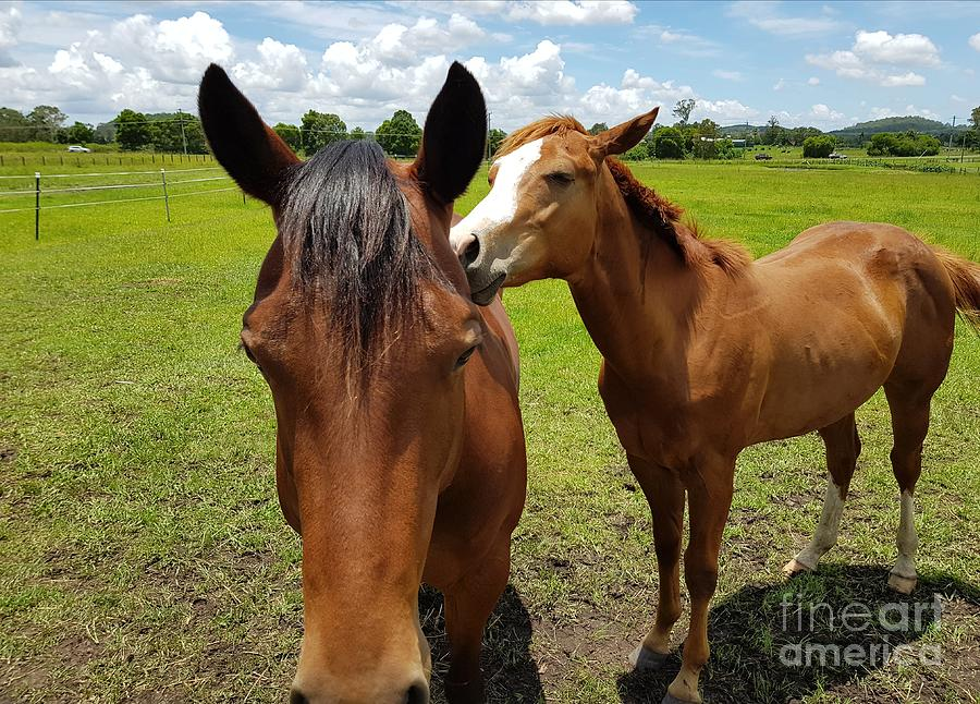 Sweet Horses  by Cassy Allsworth