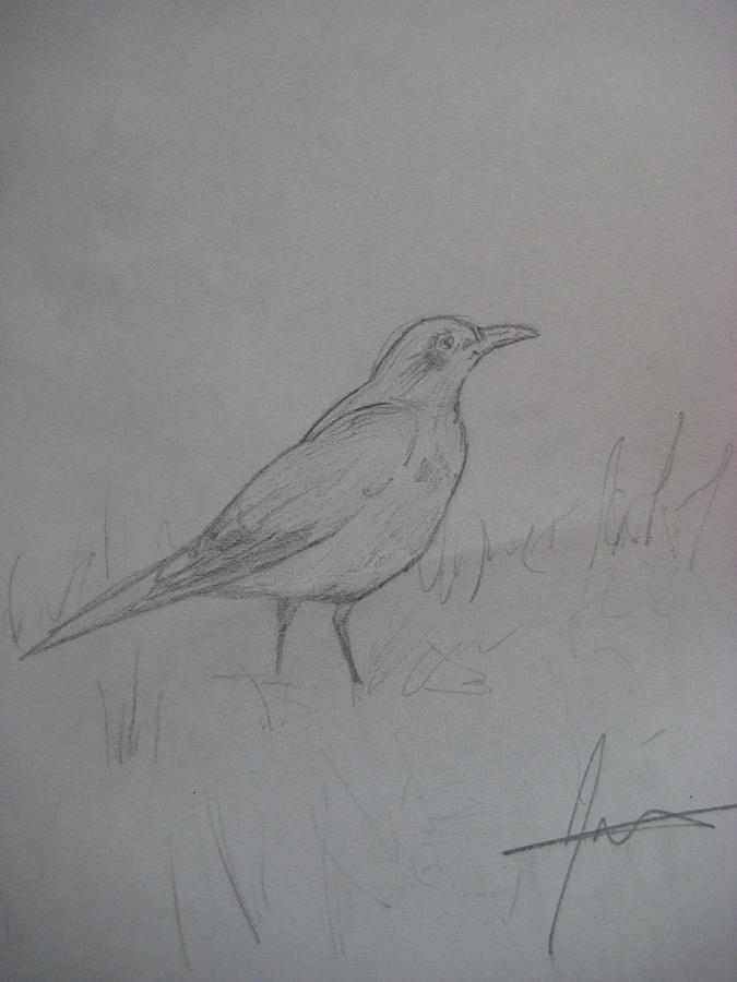 Bird Drawing - Sweet Life by Jules Brodeur