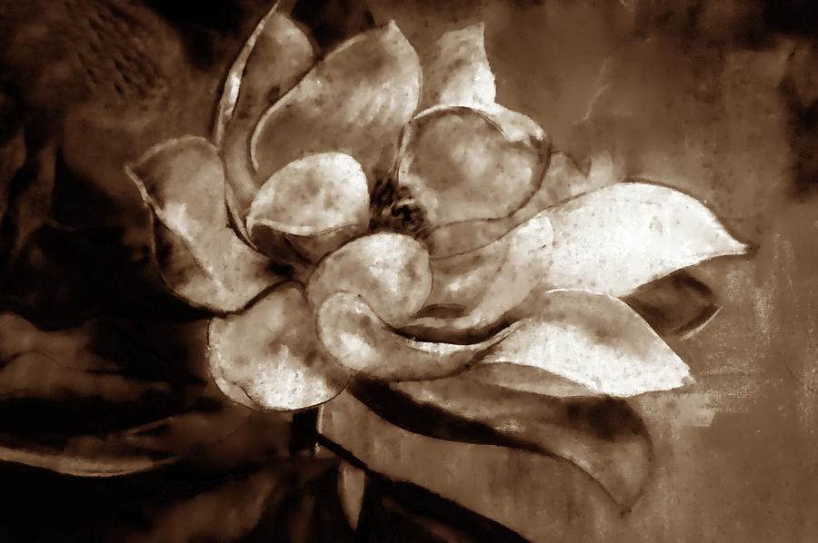 Sweet Magnolia Of Alabama Sepia by Lesa Fine