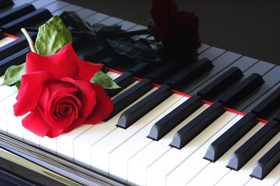 Red Rose Photograph - Sweet Melodies by Susan Pantuso