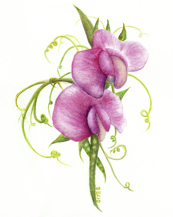 Sweet Pea Painting By Oiyee At Oystudio