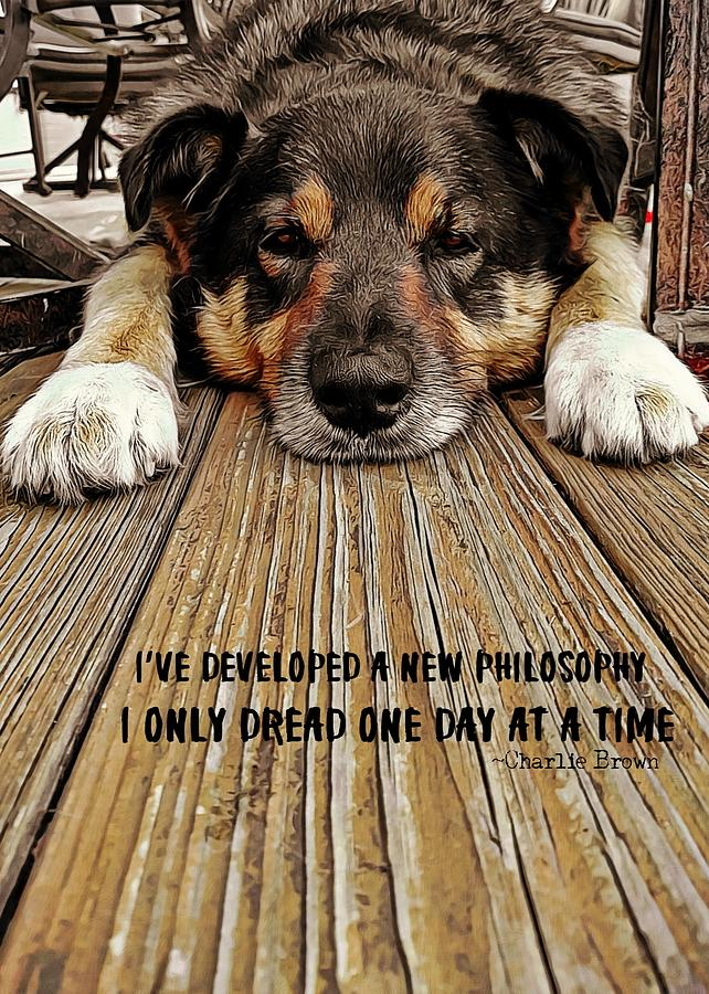 Puppy Photograph - A Dogs Life Quote by JAMART Photography