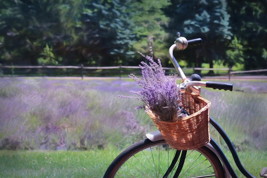 Peace Valley Lavender Farm Photograph - Sweet Ride by Lori Deiter