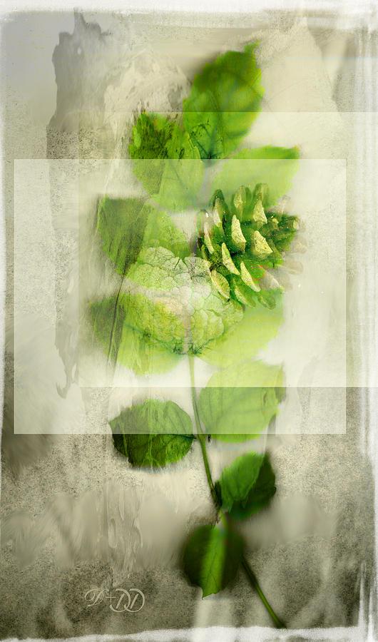 Dan Turner Digital Art - Sweet Rustic Pine by Dan Turner