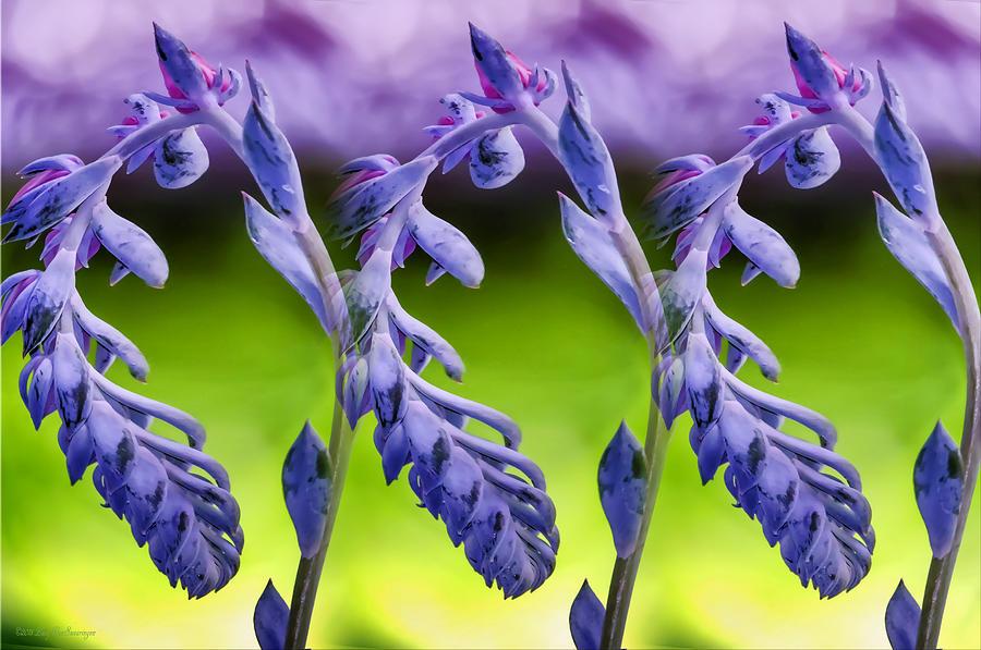 Succulent Photograph - Succulent Swirl by Lucy VanSwearingen