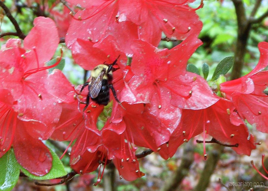 Sweet To Be An Azalea Tree by Kristin Aquariann