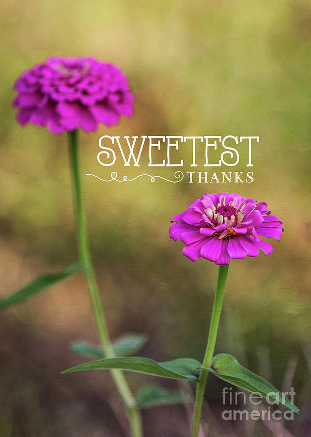 Sweetest Thanks by Mechala Matthews