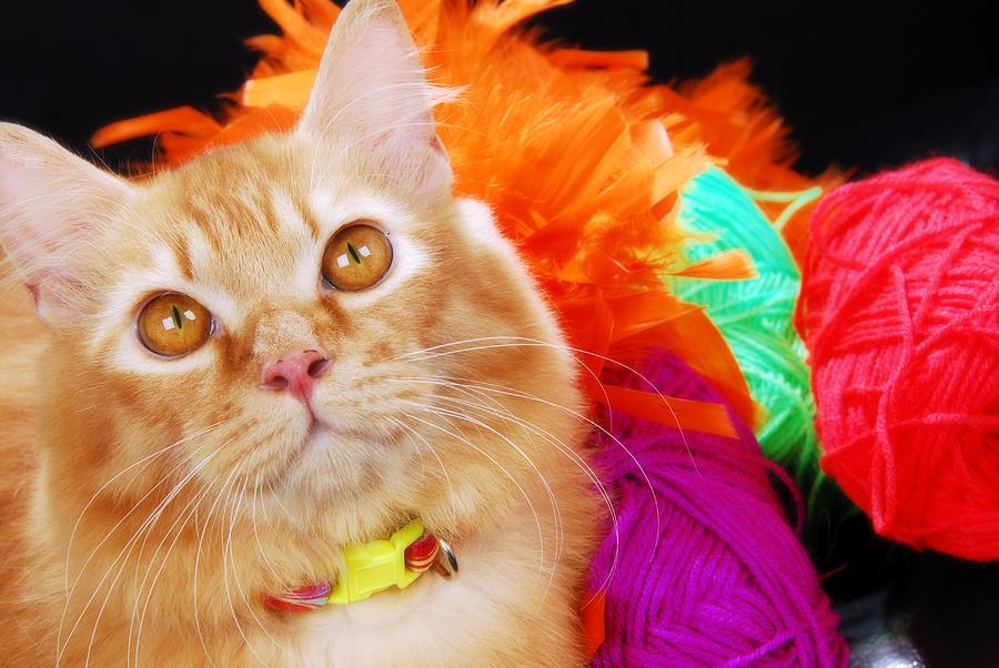 Cat Pets Photograph - Sweetheart by Mas Farid