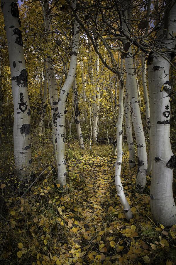 Sweetheart Trail by Dusty Wynne