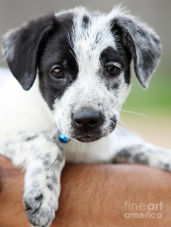 Puppy Photograph - Sweetness by Amanda Barcon