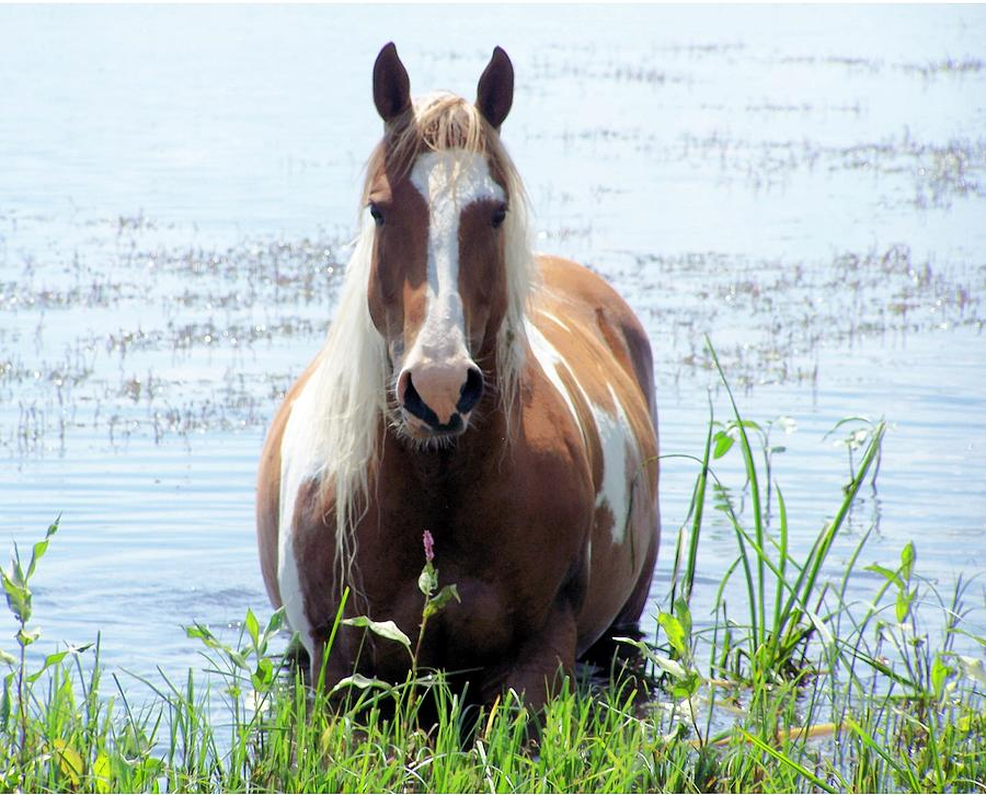 Horse Photograph - Swimming by Tracy Siebels