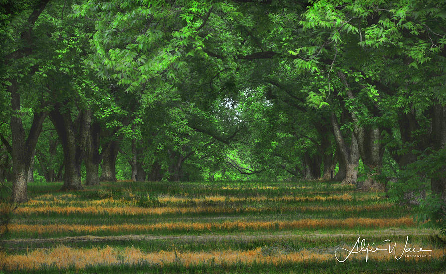 Landscape Photograph - Swirls And Stripes by Alfie Wace