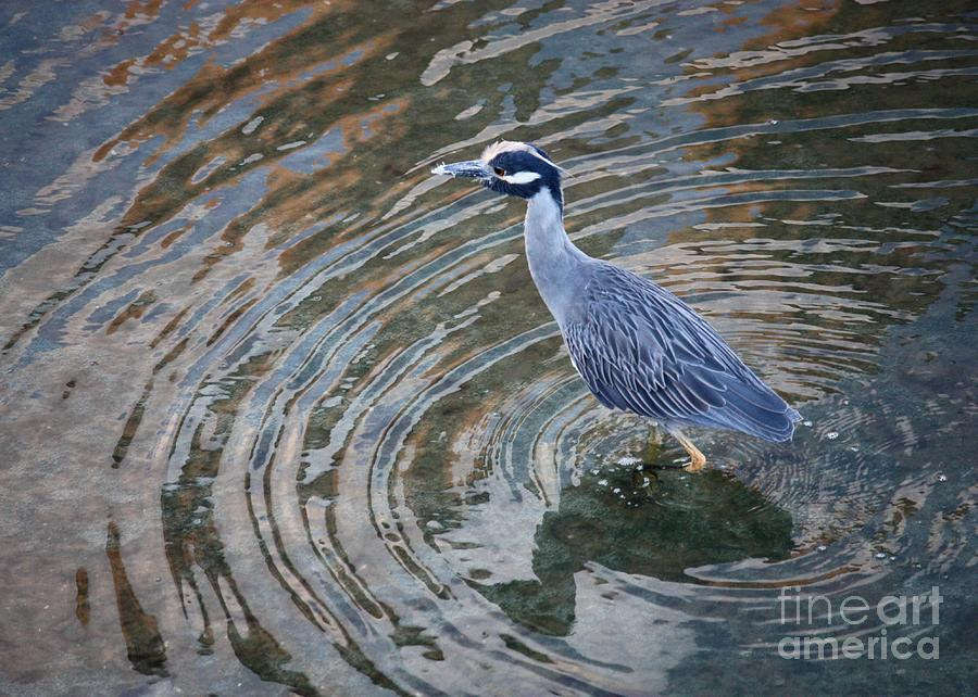 Swirls Around Heron Photograph