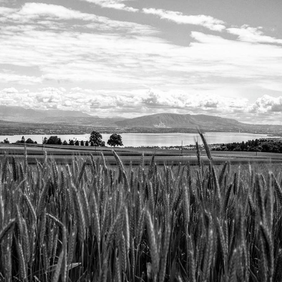 Wheat Photograph - Swiss View by Aleck Cartwright