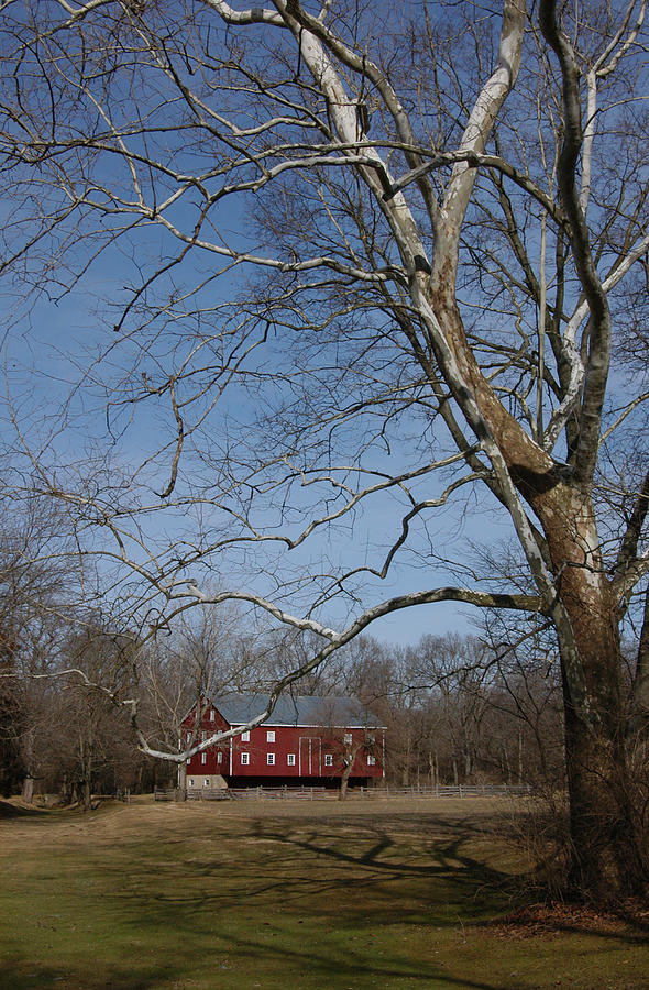 Sycamore Photograph - Sycamore And Barn by Paul Farrier