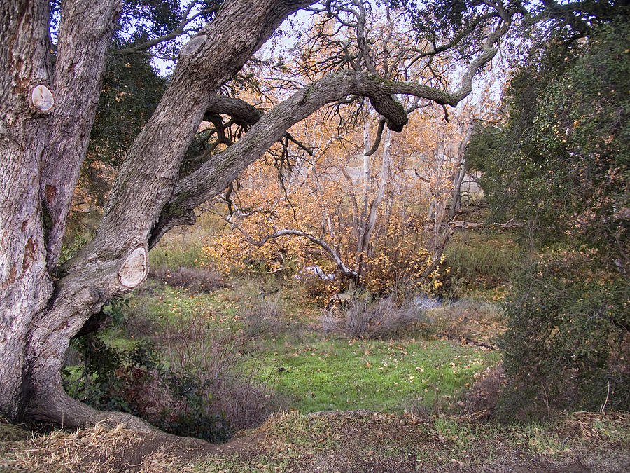 Landscape Photograph - Sycamore Grove Fall by Karen  W Meyer