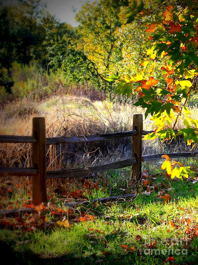 Fence Photograph - Sycamore Grove Fence 1 by Carol Groenen