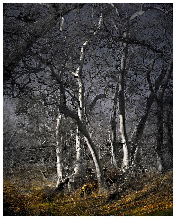 Landscape Photograph - Sycamore Grove by Karen  W Meyer