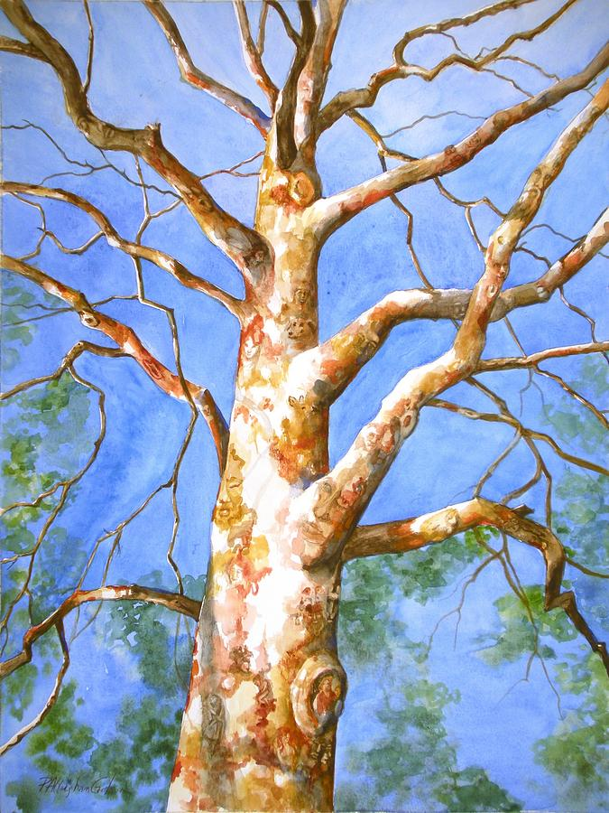 Fine Art Painting - Sycamore Tree With A Memory by Patricia Allingham Carlson