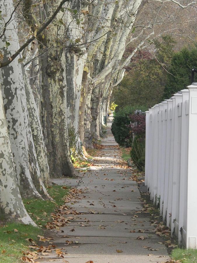 Sycamore Walk by Leon deVose