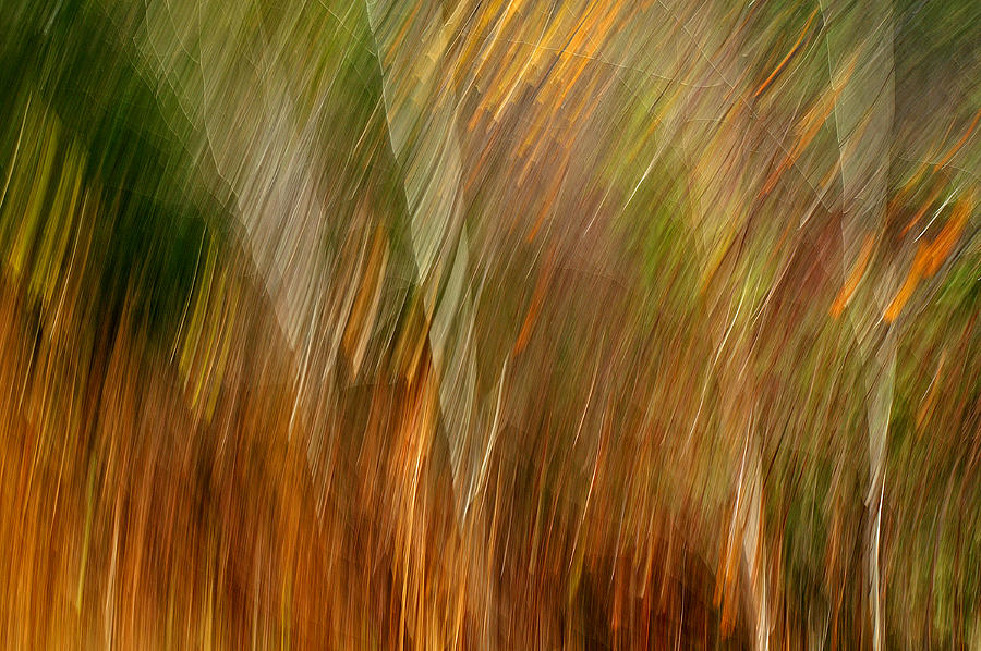 Abstraction Photograph - Sylvan Meld by Bill Morgenstern