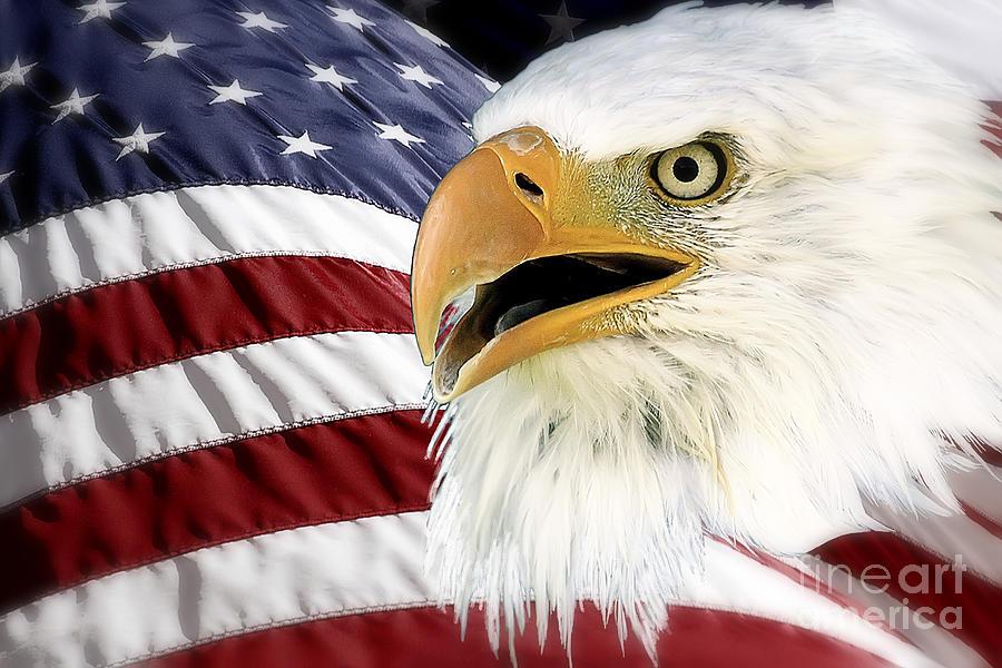 Bald Eagle Photograph - Symbol Of America by Teresa Zieba