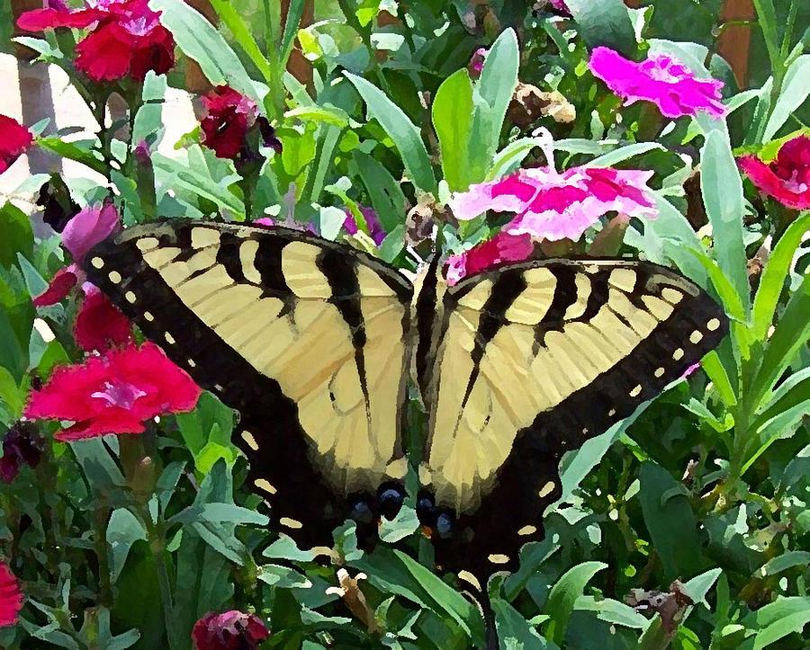 Swallowtail Photograph - Symmetry by Sandi OReilly
